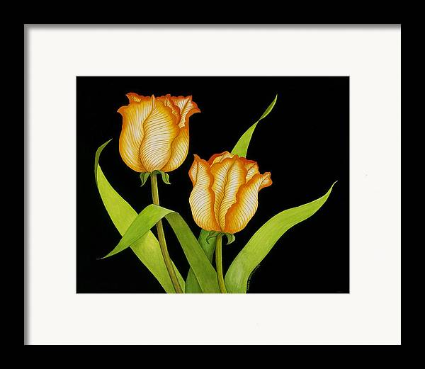 Two Orange-yellow Tulips Posing On A Black Background Framed Print featuring the painting Posing Tulips by Carol Sabo