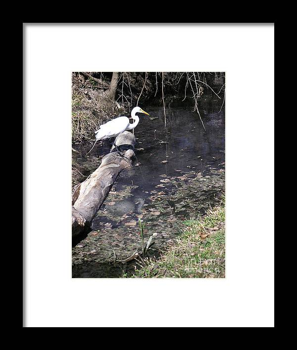 Nature Framed Print featuring the photograph Positioning For The Jump by Lucyna A M Green