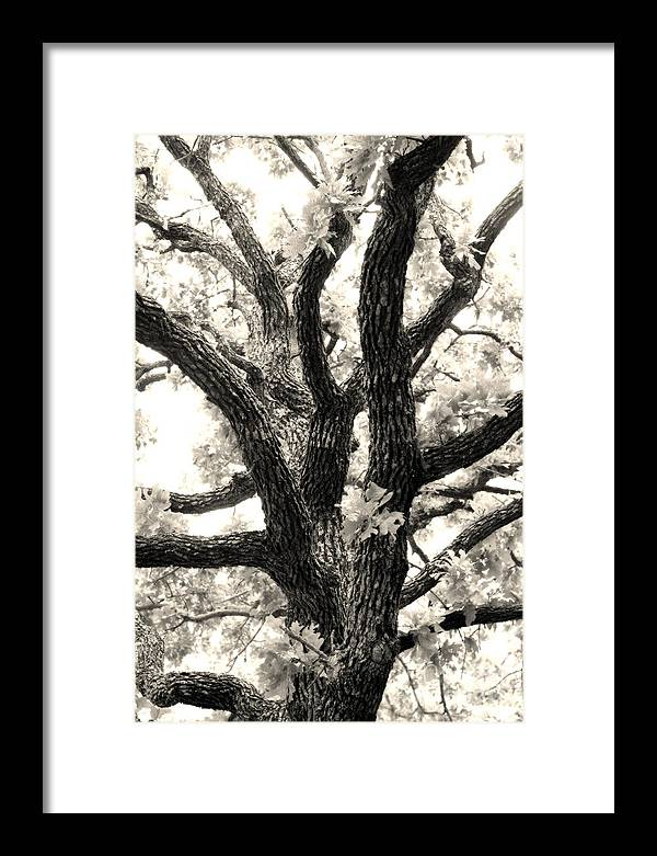 Post Framed Print featuring the photograph Post Oak by Jeannie Burleson