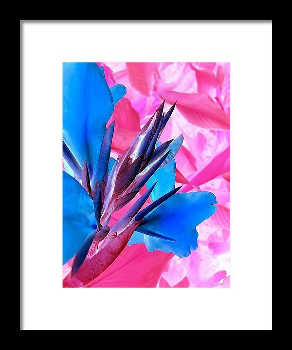 Bird Of Paradise Framed Print featuring the photograph Poster Print 30 by Jim Darnall