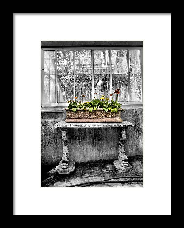 Potted Framed Print featuring the photograph Potted by Russell Styles