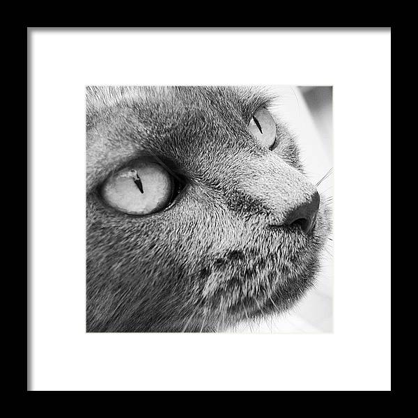 Framed Print featuring the photograph Pout by Cameron Bentley