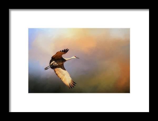 Nature Framed Print featuring the photograph Power Stroke, Sandhill Crane, Bosque del Apache, New Mexico by Zayne Diamond Photographic