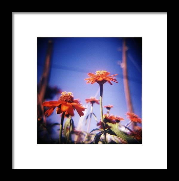 Flowers Framed Print featuring the photograph Powerflower by JoSe Perez