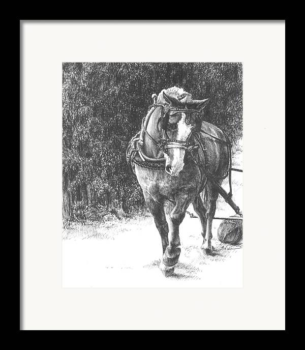 Horse Framed Print featuring the drawing Powerful Grace by Barbara Widmann