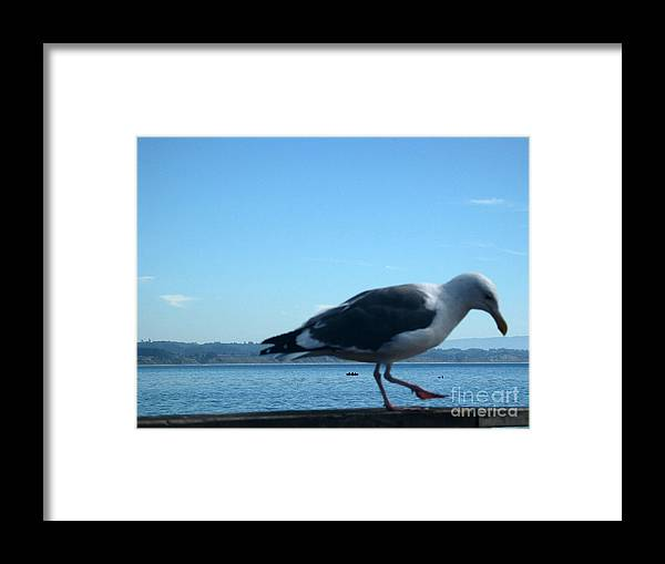 Landscape Framed Print featuring the photograph pr 117 - A Seagull On Thr Fence by Chris Berry
