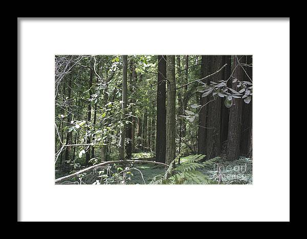 Landscape Framed Print featuring the photograph pr 138 - Frolicking Trees by Chris Berry