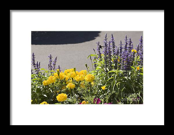 Landscape Framed Print featuring the photograph pr 141 - Flower Bed by Chris Berry