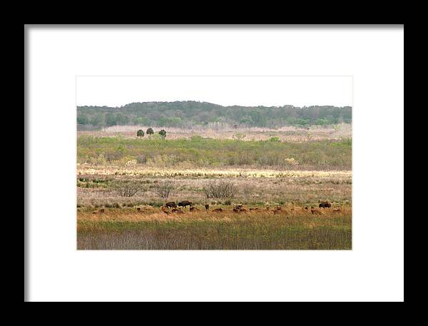 Landscape Framed Print featuring the photograph Prairie Bison by Lindy Brown