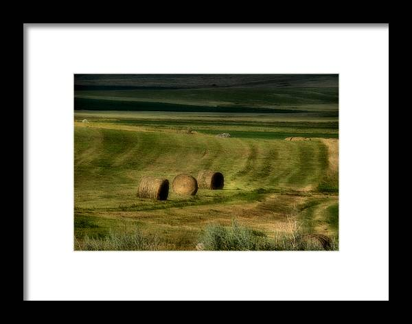 Hay Framed Print featuring the photograph Prairie Grace by Tingy Wende