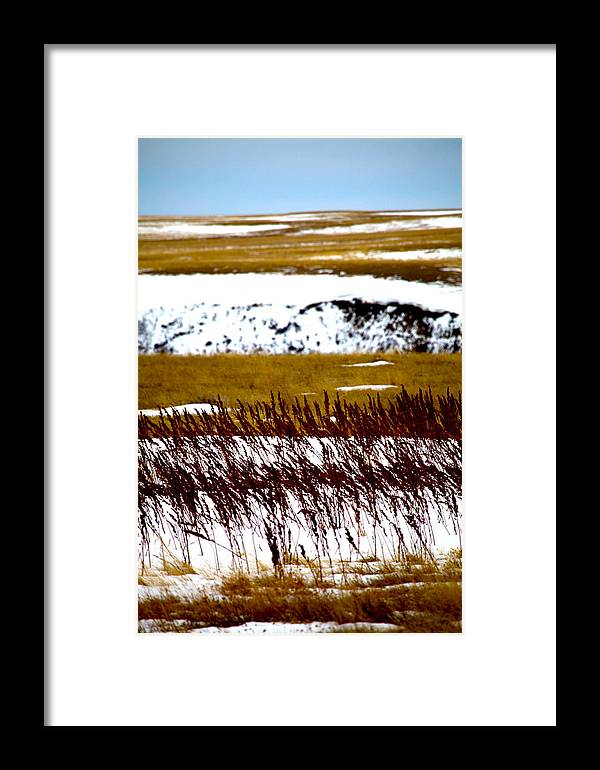 Framed Print featuring the photograph Prairie Winter by Darcy Dietrich