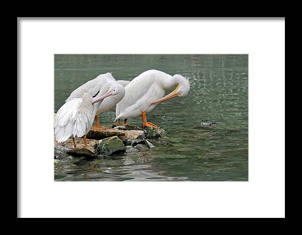 Teresa Blanton Framed Print featuring the photograph Prayer Of The Pelicans by Teresa Blanton