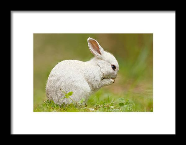 Afternoon Framed Print featuring the photograph Praying White Rabbit by Roeselien Raimond