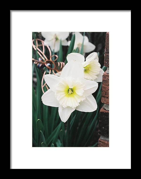 Flowers Framed Print featuring the photograph Precious Daffodils by Cheryl Martin