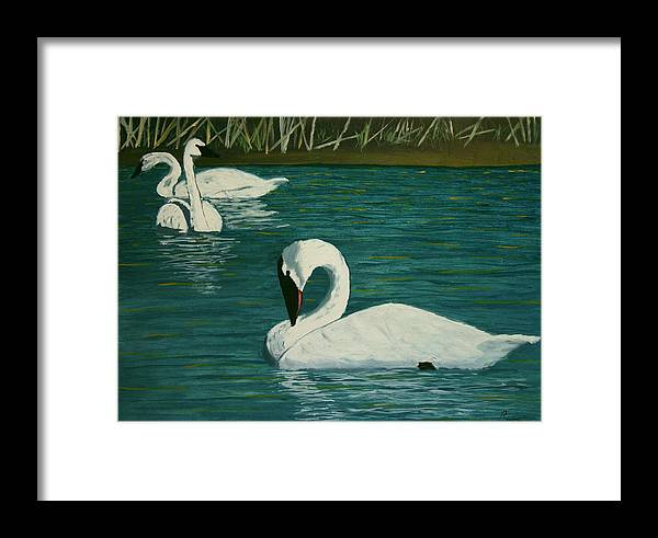 Swans Framed Print featuring the painting Preening Swans by Robert Tower