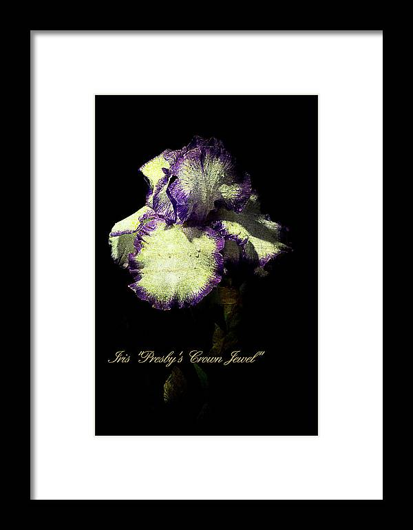 Agriculture Framed Print featuring the photograph Presby's Crown Jewel Iris by John Trax
