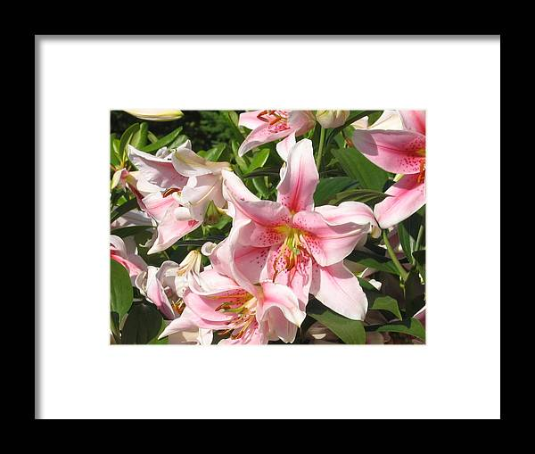 Framed Print featuring the digital art Prettier In Pink by Barb Morton