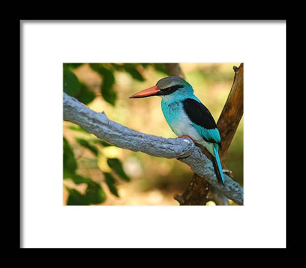 Kingfisher Framed Print featuring the photograph Pretty Bird by Gaby Swanson