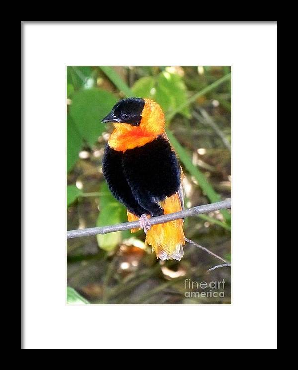 Bird Framed Print featuring the photograph Pretty Birdy by Emily Kelley