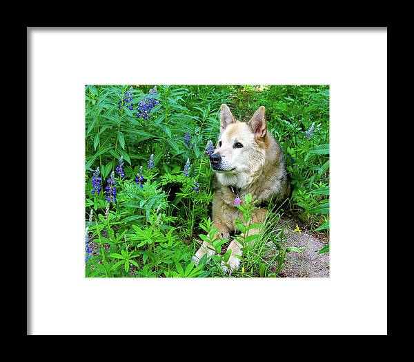 Alert Framed Print featuring the photograph Pretty Dog by Crystal Garner