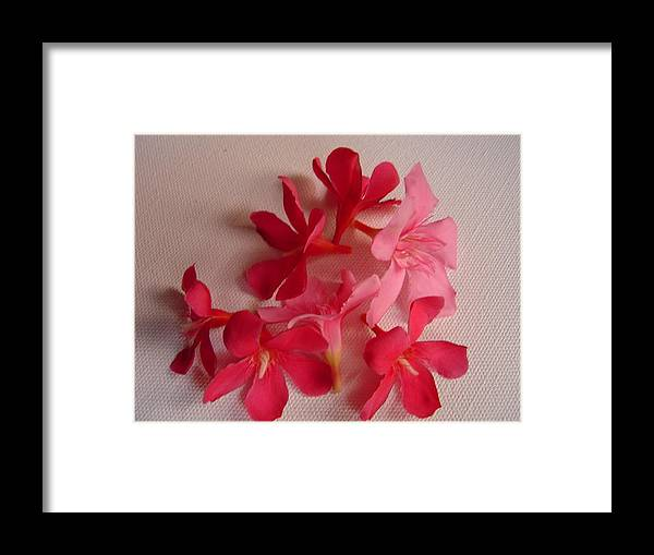 Foliage Framed Print featuring the photograph Pretty Flowers by Usha Shantharam
