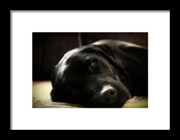 Black Lab Framed Print featuring the photograph Pretty Girl by Michael Draper