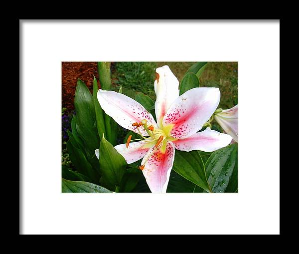 Framed Print featuring the digital art Pretty In Pink by Barb Morton