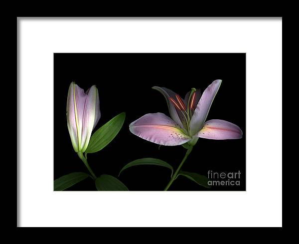 Scanography Framed Print featuring the photograph Pretty In Pink by Christian Slanec
