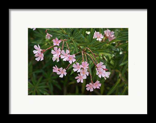 Pink Framed Print featuring the painting Pretty In Pink by Debbie May