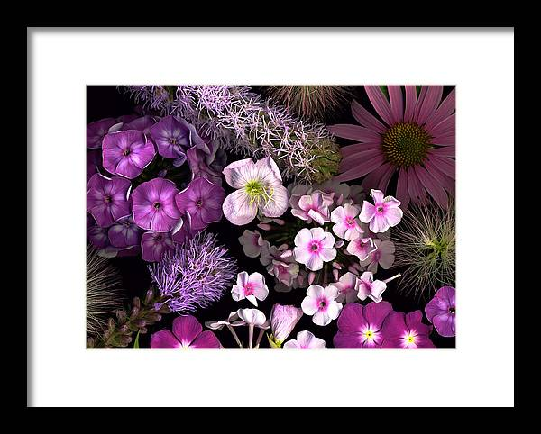 Scanography Framed Print featuring the photograph Pretty In Pink by Deborah J Humphries
