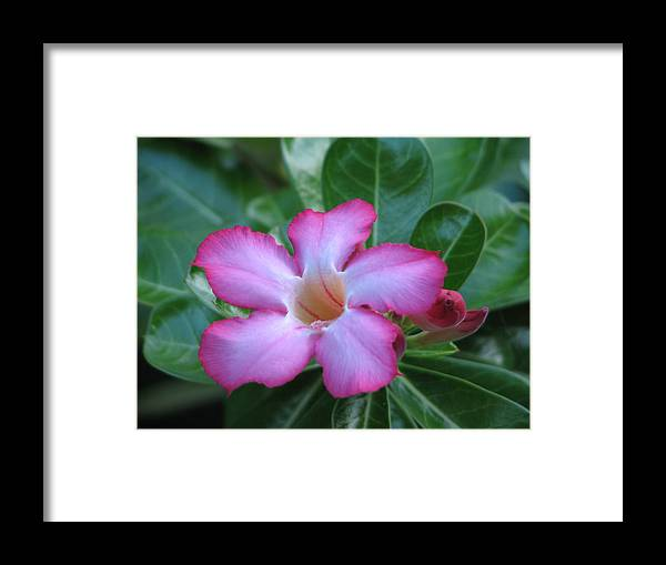 Pink Framed Print featuring the photograph Pretty In Pink by Ginger Howland
