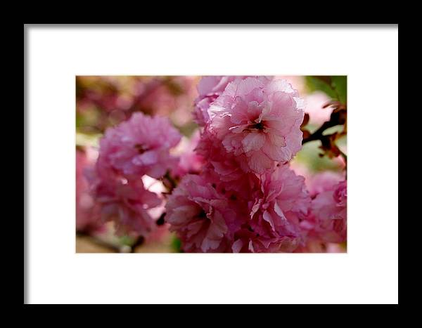 Pink Framed Print featuring the photograph Pretty In Pink by Lisa Jayne Konopka