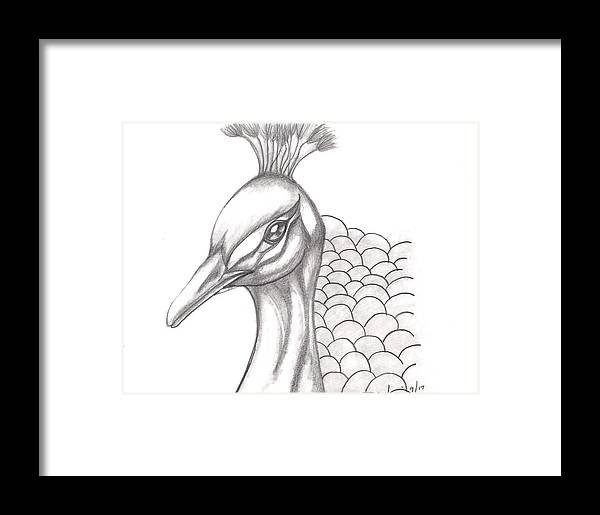 Peacock Framed Print featuring the drawing Pretty Peacock by Kellie Simpson
