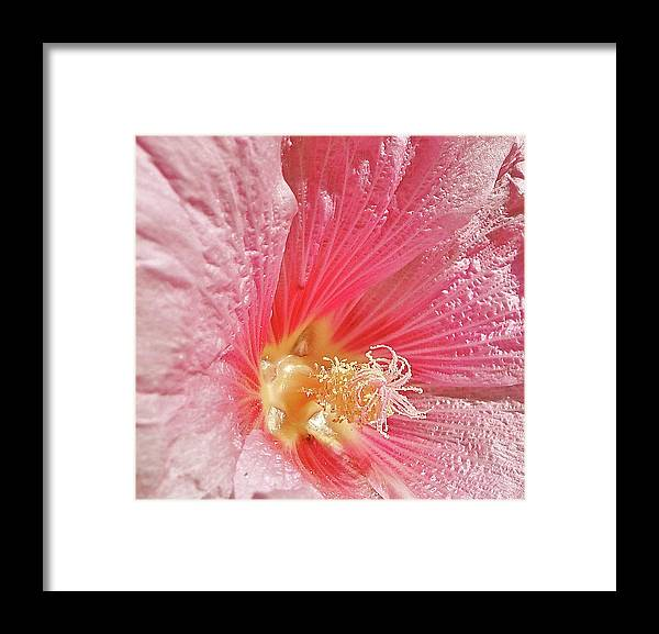 Pink Framed Print featuring the photograph Pretty Pink Flower by Liz Vernand
