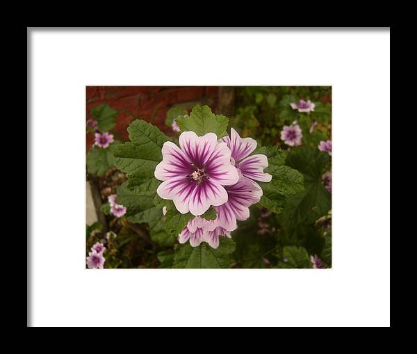 Flowers Framed Print featuring the photograph Pretty Pink by Jim Beer