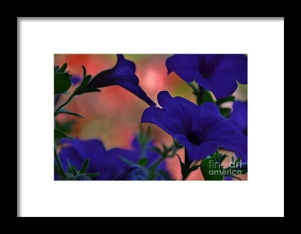 Petunia Framed Print featuring the photograph Pretty Petunias by Terri LeSaint-Keller