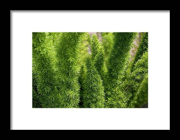 Plant Framed Print featuring the photograph Prickly Green Shrub by Michele Stoehr