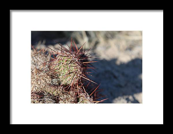 North Framed Print featuring the photograph Prickly Pear by Nicholas Miller