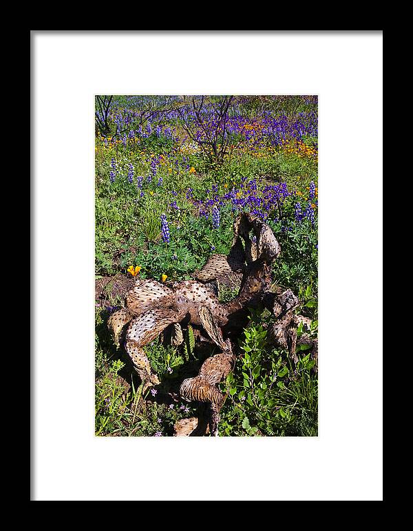 California Framed Print featuring the photograph Prickly Pear Rebirth by Greg Clure