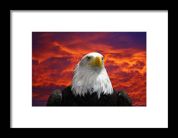 Eagle Framed Print featuring the photograph Pride And Fire by KatagramStudios Photography