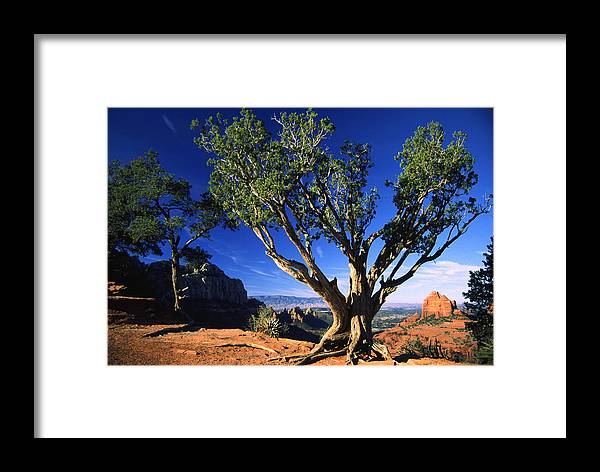 Arizona Framed Print featuring the photograph Primary Colors by Randy Oberg