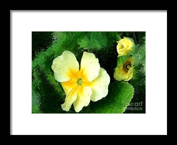 Digital Photograph Framed Print featuring the photograph Primrose 2 by David Lane