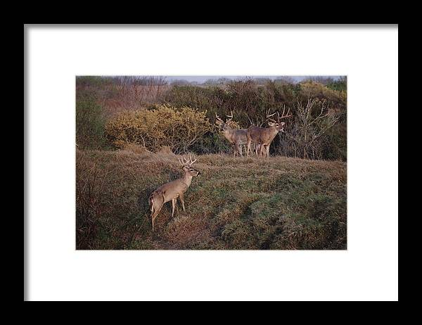 Deer Framed Print featuring the photograph Private Ranch 2 by Wendell Baggett
