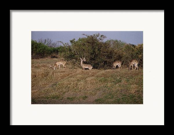 Deer Framed Print featuring the photograph Private Ranch 3 by Wendell Baggett