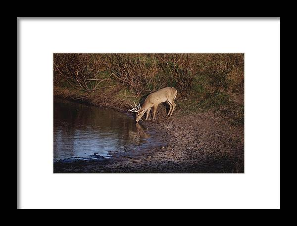 Deer Framed Print featuring the photograph Private Ranch 5 by Wendell Baggett