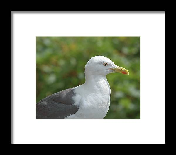Adult Framed Print featuring the photograph Profile Of Adult Seagull by Jacek Wojnarowski