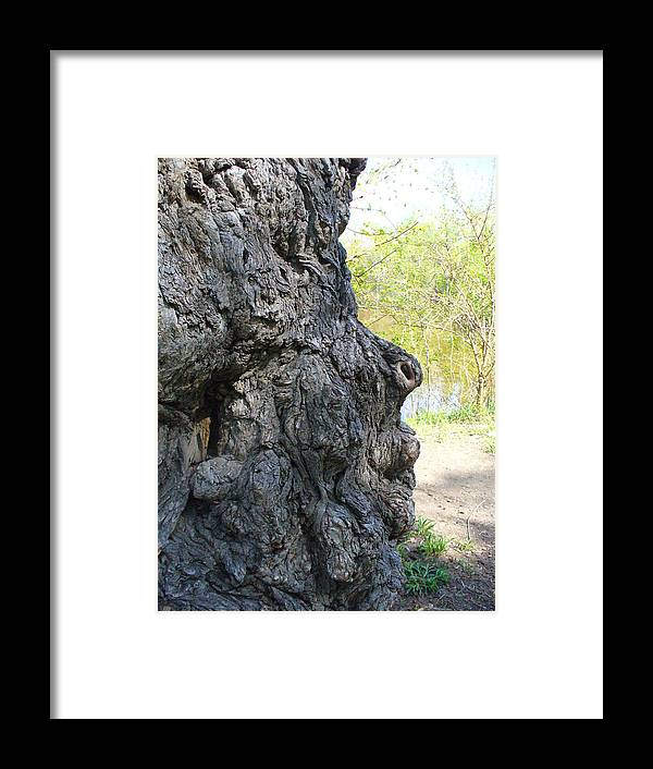 Tree Framed Print featuring the photograph Profile Of An Ancient Willow by Peggy King