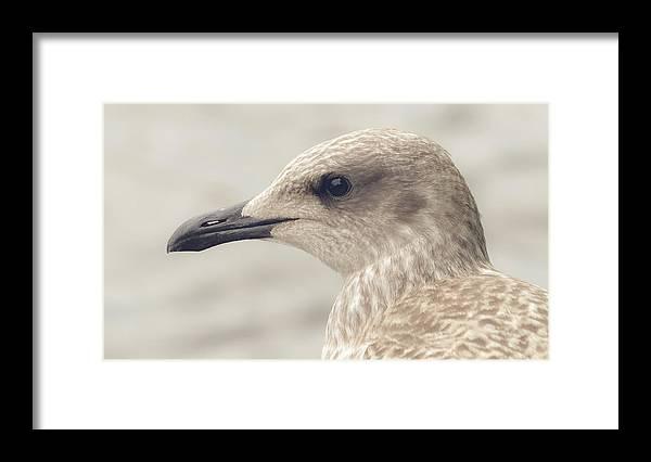 Animal Framed Print featuring the photograph Profile Of Juvenile Seagull by Jacek Wojnarowski