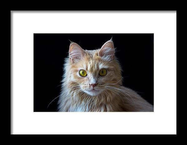 Animal Framed Print featuring the photograph Profile Photo by Peteris Vaivars