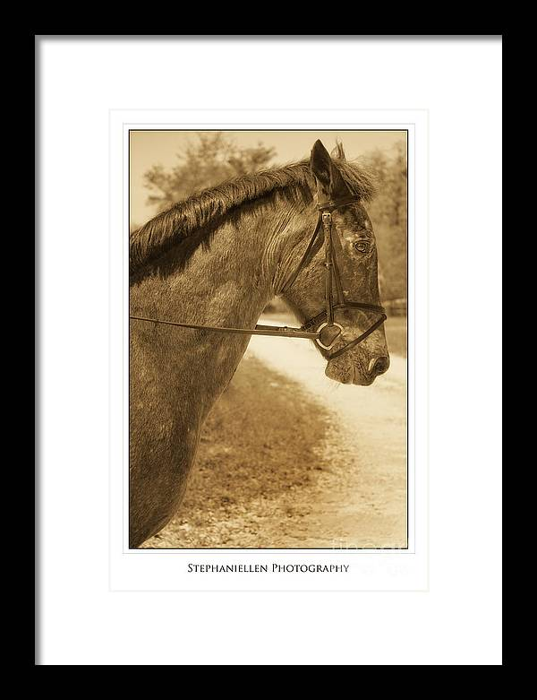 Horse Framed Print featuring the photograph Profile by Stephanie Hayes